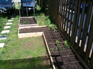 Both garden beds, in all their glory.